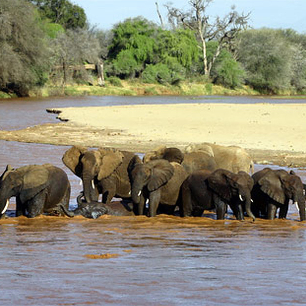 Contribution to Honeymoon in Kenya