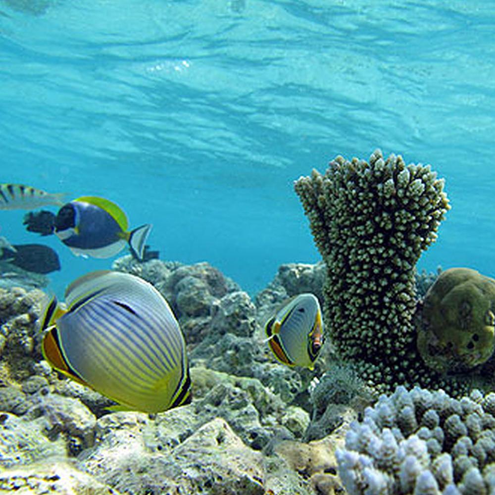 Contribution to Maldives Snorkelling Session
