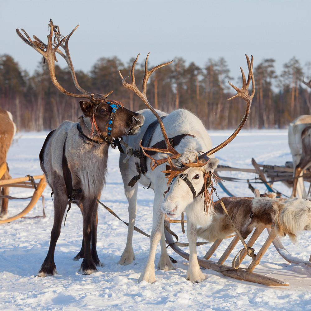 Contribution to Honeymoon Suite in Lapland