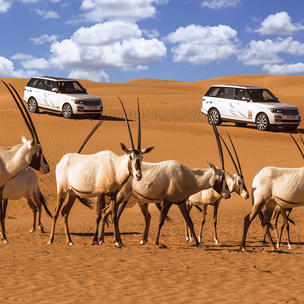Platinum Luxury Desert Safari - Adult